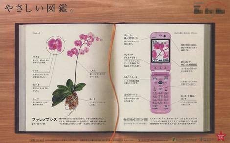 Phalaenopsis_newspaper_advertisem_3