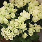 White_roses_2