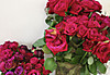Rose01s_3