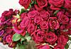 Rose02s_2